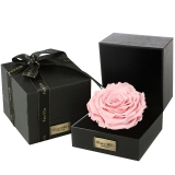 Para Ella浅粉色进口永生花巨型玫瑰花礼盒生日纪念日七夕情人节礼物送女生女友